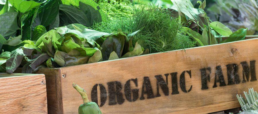 Business idea organic farm