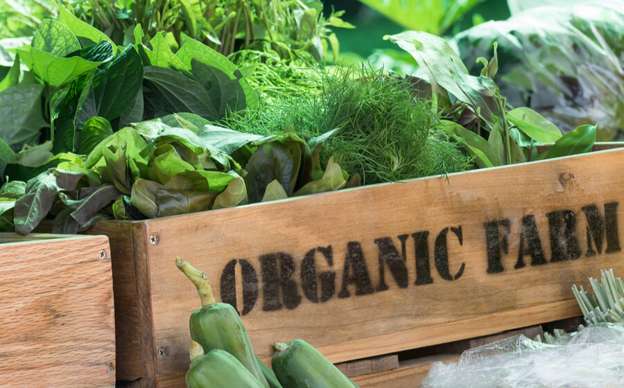 Business idea organic farm